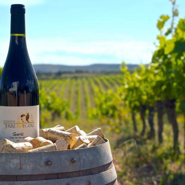 Dégustation de vin du domaine de Terre Mégère
